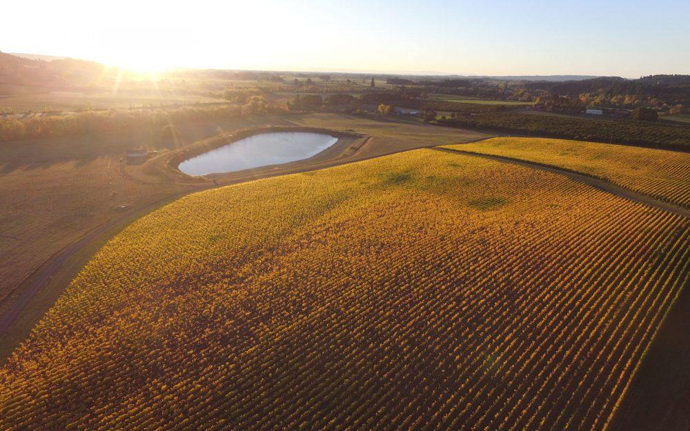 Gran Moraine Vineyard Yamhill-Carlton AVA