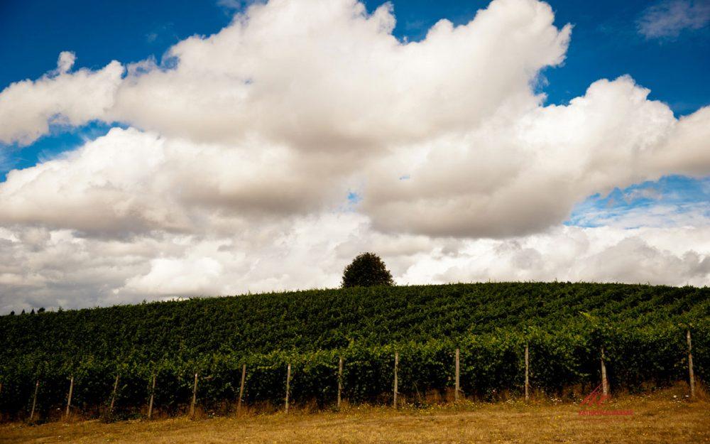 Carlton Cellars Wine Tasting Yamhill-Carlton AVA