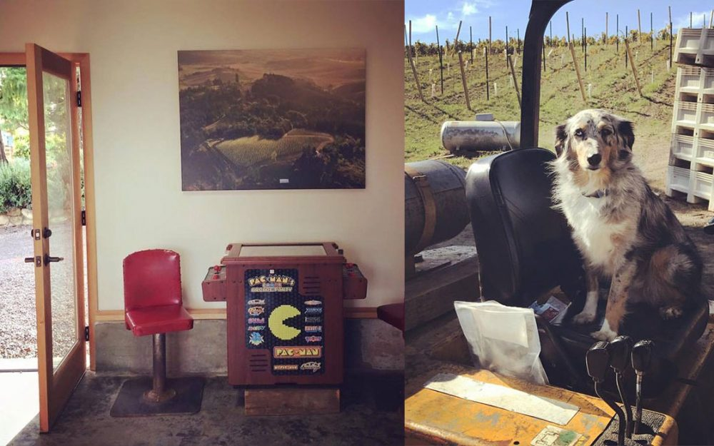 Roots Wine Company Yamhill-Carlton AVA
