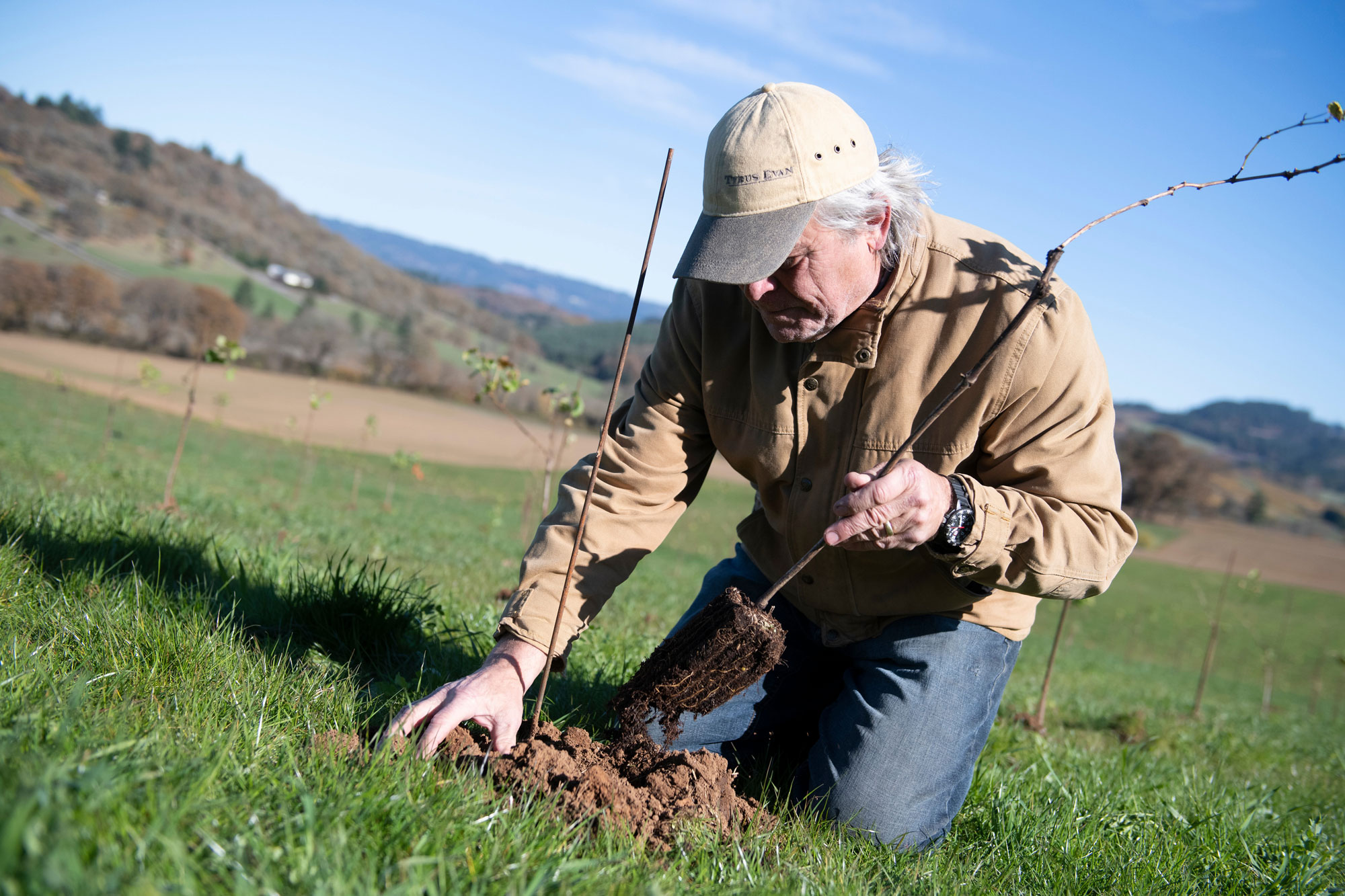 Planting Vines Yamhill-Carlton AVA